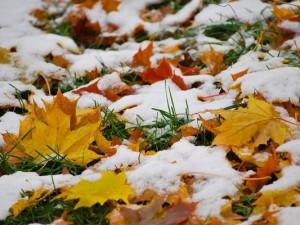 Ночью в Смоленской области ожидается снег