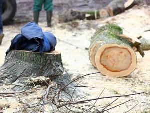 В Шумячском районе Смоленщины задержали черных лесорубов
