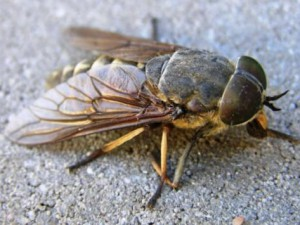 Укусы насекомых и животных и первая помощь при них