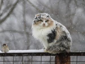 В Смоленской области весна начнется снегопадом, переходящим в метель