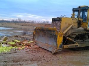 В Смоленской области захоронили яблоки неизвестного происхождения