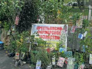 Места для торговли дачников оборудовали на улице Николаева в Смоленске