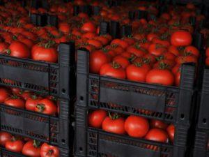 Смоленская таможня остановила на границе турецкие помидоры
