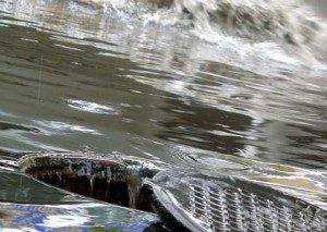 В Смоленской области вероятно усиление дождей
