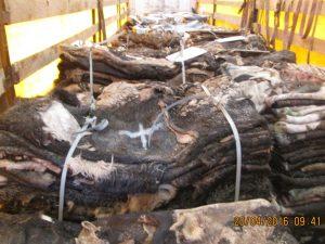 Под Смоленском запрещён ввоз почти 20 тонн шкур крупного рогатого скота
