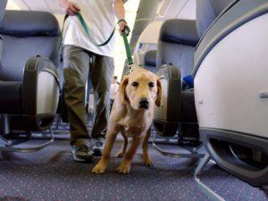 Перевозка животных на авиалайнере