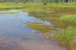 Реадовка в Смоленске осталась без озера?