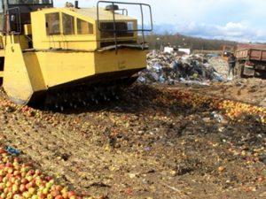 19 тонн польских яблок везли в Смоленск под видом бройлеров