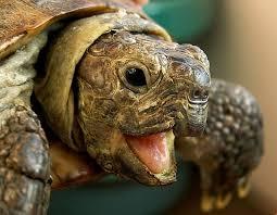 В Смоленске отметят Всемирный день черепахи