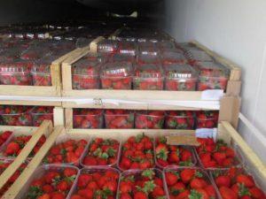 В Смоленскую область не пустили 18 тонн санкционной клубники