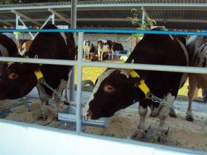 В Смоленской области поддержат развитие семейных животноводческих ферм