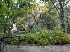 В Смоленской области на подростка упало дерево