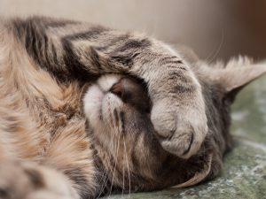 Клиника Био-Вет – ушивание ран у животных и иная ветеринарная помощь вашим питомцам: быстро, качественно, недорого