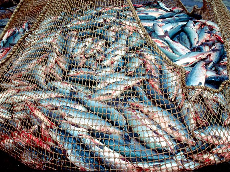 невод рыболовный