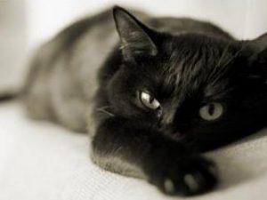 Выделение из глаз у кошек – сигнал опасности?