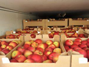 На границе Смоленской области задержали девять грузовиков с санкционными фруктами