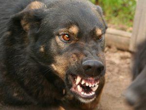 В Смоленской области выявили 45 случаев заболевания бешенством у животных