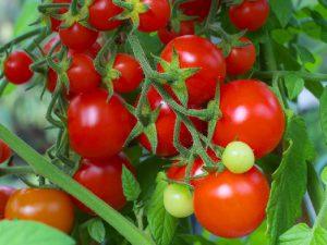 Смоленские таможенники задержали партию санкционных томатов