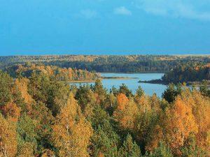 Смоленское поозерье получит деньги на восстановление лесов