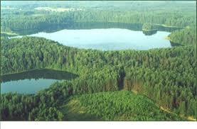 В Смоленске откроется фотовыставка болот «Смоленского Поозерья»