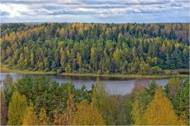 Смоленские леса в 2016 году принесли в казну почти 240 миллионов рублей