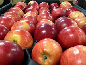 Полицейские пресекли попытку ввоза в Смоленск 19 тонн санкционных яблок