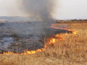 МЧС призывает граждан быть осторожными с огнём