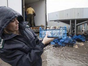 На Смоленщине уничтожены около 80 тонн овощей, фруктов и грибов