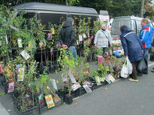 В Смоленске пройдет традиционная ярмарка «Сад-огород»