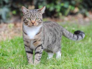 Кошки, которые способны спасти жизнь