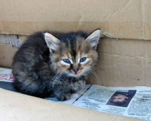 Смолянин погиб, спасая котенка