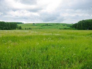 Многодетным семьям предоставят землю в Дорогобуже