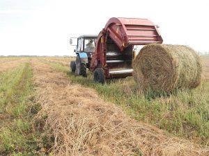 Более 200 тысяч тонн сенажа заготовлено в Смоленской области