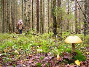 В лесу заблудился пожилой смолянин с собакой