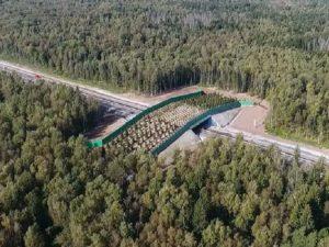 Три экодука для лосей будут построены в Смоленской области