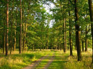 Для лесопарковой зоны вокруг Смоленска утверждены особые условия использования