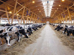 В Демидовском районе выявлены нарушения требований об отходах производства животноводства