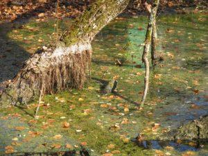 В смоленском болоте нашли труп пенсионерки