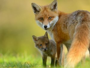 Зоопарк в Смоленске протестует против использования меха животных