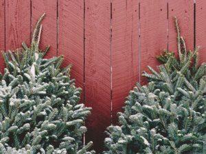 Где в Смоленске можно купить новогодние деревья и товары