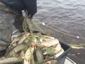 Семейный подряд. Отца и сына задержали под Смоленском за незаконную рыбалку
