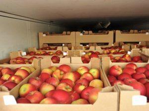 В Смоленской области уничтожили 56 тонн яблок и помидоров