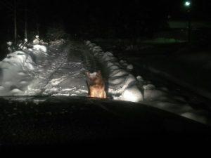 В Смоленской области умирает от холода собака, хозяева которой уехали в Турцию