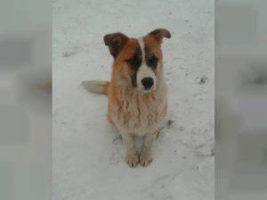 В Смоленске владелец стоянки приказал расстрелять собаку