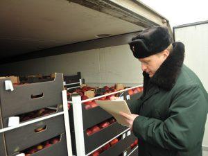20 фур с «санкцонкой» задержали смоленские таможенники