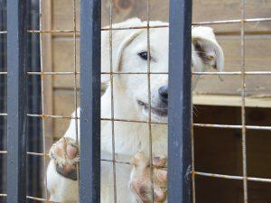 В Смоленске один из первых обитателей пункта временного содержания безнадзорных животных нашел семью