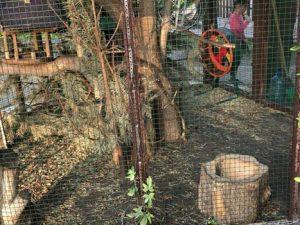 В Смоленске в «Лопатинском саду» умерла белка