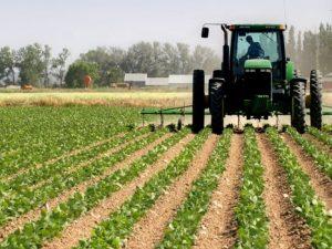 Начинающие фермеры могут получить государственную поддержку