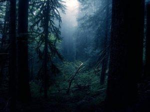 Найдены два брата, пропавшие в смоленском лесу