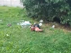 В Смоленске на детской площадке нашли отрубленную голову
